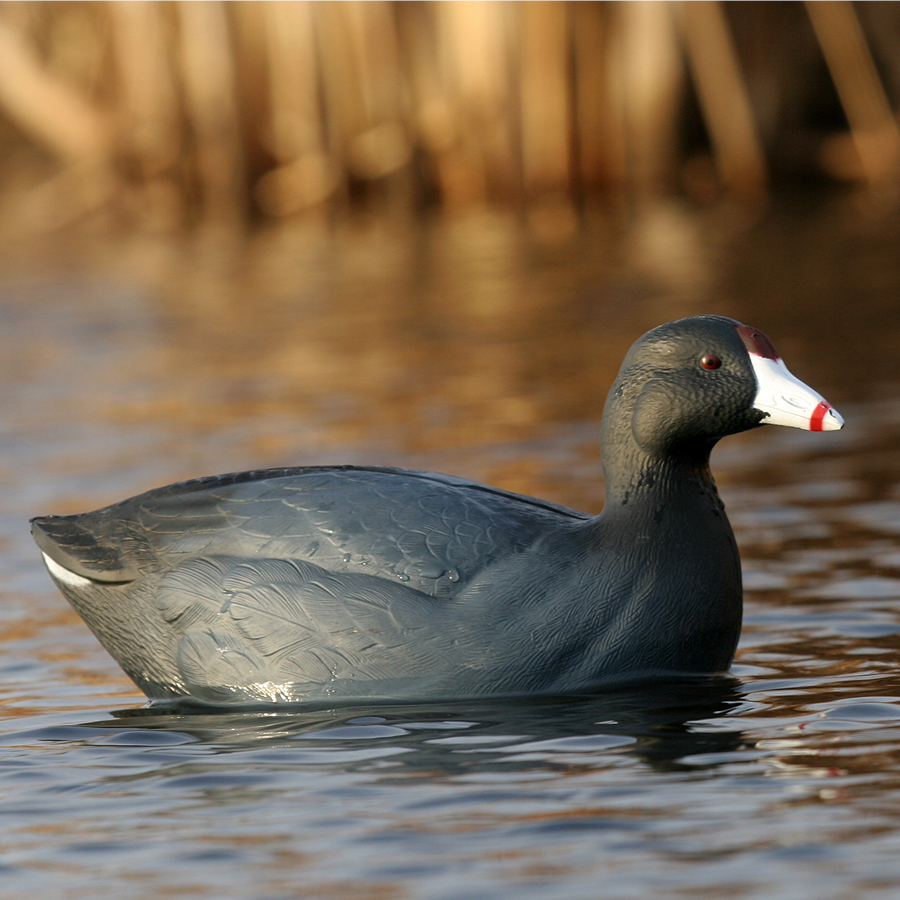 Avery GHG Over Size Coot Decoys Pk6